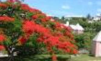Бермуди