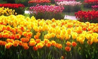Найдешевші гарні сади світу