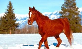 Новий рік 2014 року - рік дерев`яної коня.