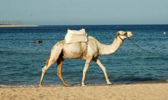 Відпочинок в єгипті з дітьми, хіба це не мрія? Єгипет ціни 2012
